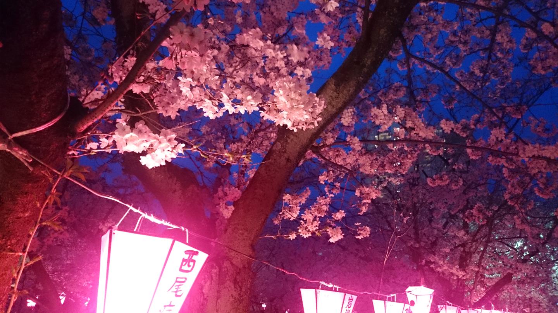 西尾みどり川桜まつり 夜桜