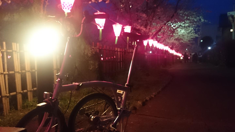 夜桜ブロンプトン