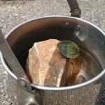 ブロンプトンで亀を保護した話