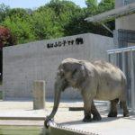 岡崎東公園に「ぞうめし屋」が出来た!